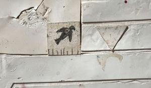 picassos bird